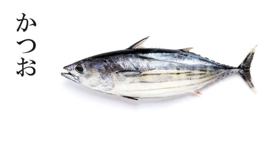 Image d'un katsuo, un poisson très utilisé au japon pour faire des plats de poisson découpé froid mais savoureux
